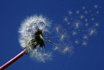 6 consigli utili per gestire le allergie da polline
