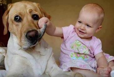 Nati con cesareo, cani e gatti proteggono da obesità e asma