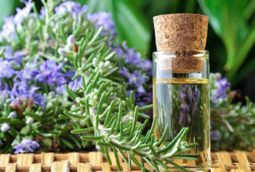 L'olio essenziale di rosmarino migliora la memoria dei bimbi