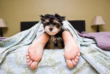 Dormire con il proprio cane fa riposare meglio, più conforto e sicurezza