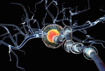 Sclerosi multipla, spiegato perchè la cura con l'interferone funziona