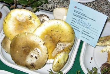 ATS Sardegna – Consumo sicuro dei funghi: attivo l'Ispettorato micologico