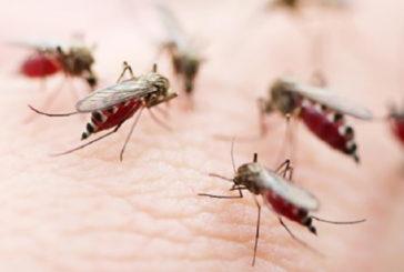Allarme a Taranto. 4 i migranti ricoverati con la Malaria