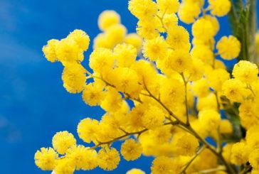"""""""Non solo mimose"""", dal 5 all'8 Marzo iniziativa a Ragusa"""
