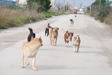 ATS Sardegna – Tutela degli animali e prevenzione del randagismo