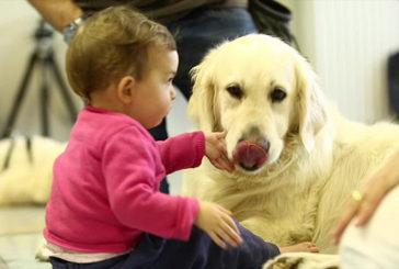 "Progetto ""Pet-Therapy"", ASL To3 chiude con un bilancio positivo"