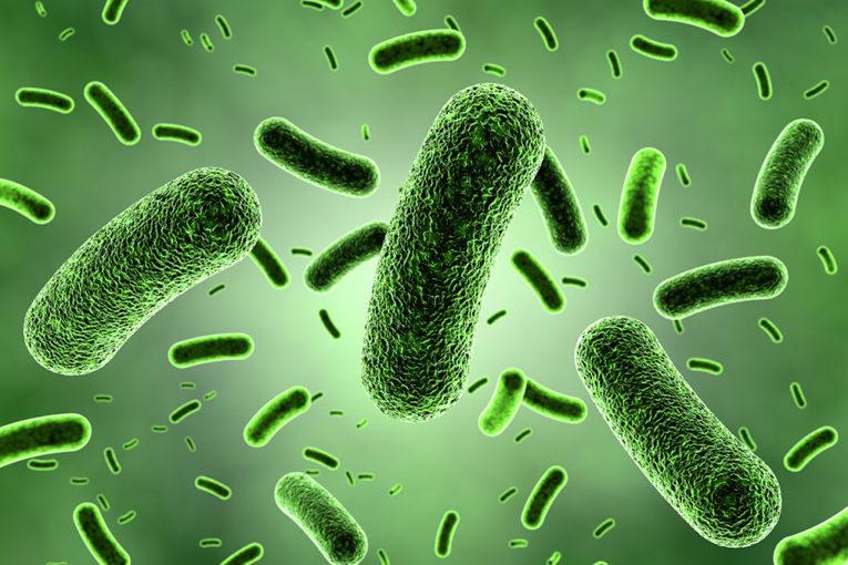 Infezione Mycobacterium