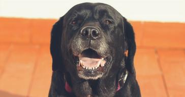 Anagrafe canina: Microchip day giovedì a Oristano