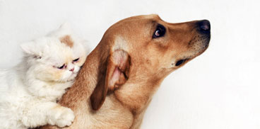 anagrafe canina e microchip