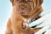 Giovedì 4 aprile all'ex mattatoio comunale di Oristano si terrà un nuovo appuntamento con i veterinari Assl Oristano dedicato alla microchippatura dei cani non ancora iscritti all'anagrafe canina.