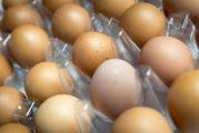 Incendio di Biondi Recuperi e uova prodotte da animali da cortile nell'area interessata: se ne sconsiglia il consumo in questi giorni