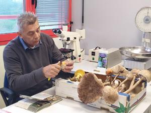 """""""Non rischiare: prima di cucinarli vieni da noi"""" L'invito dei micologi Ausl ai raccoglitori di funghi"""