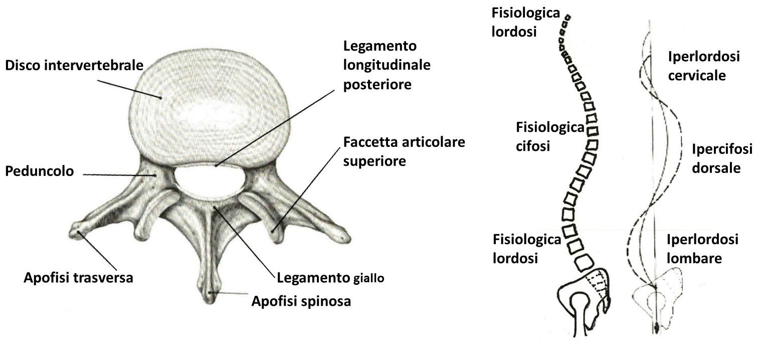 prospettiva ortopedica