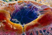 Taglia-incolla Dna per la prima volta usato nel corpo umano
