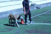 """Salute e benessere all'Istituto Minorile di Catania con progetto """"Cani in…"""""""
